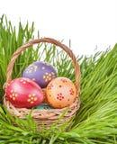 Яичка в корзине на зеленой изолированной траве 2 всех пасхального яйца принципиальной схемы цыпленока ведра цветут детеныши покра Стоковое Фото