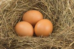 3 яичка в травянистом гнезде Стоковые Изображения