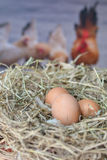 Яичка в яичке nestfresh стоковое фото