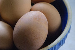 яичка голубого шара коричневые Стоковая Фотография