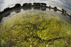 Яичка жабы Стоковое Изображение RF