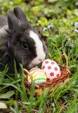Яичка зайчика пасхи нашли в малой корзине Стоковые Изображения