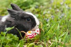 Яичка зайчика пасхи нашли в малой корзине Стоковые Изображения RF