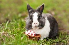 Яичка зайчика пасхи нашли в малой корзине Стоковая Фотография