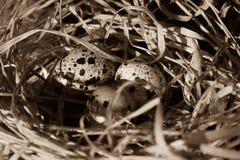Яичка запятнанные триперстками в гнезде соломы Стоковое Фото