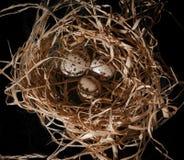 Яичка запятнанные триперстками в гнезде соломы Стоковое фото RF