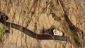 Яичка змейки Стоковое Фото