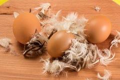 3 яичка и пера цыпленка Стоковое Изображение