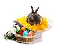 Яичка и цветки зайчика пасхи Стоковые Фотографии RF