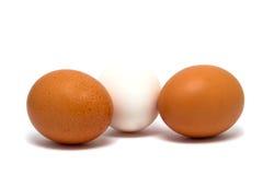 Яичка коричневые и белизна изолированная на белизне Стоковые Изображения