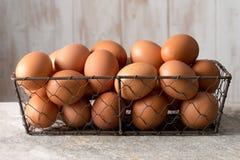 Яичка курицы в подносе провода сетки Стоковые Фото