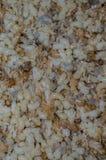 Яичка муравья Стоковое Изображение RF