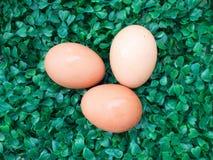 Яичка на зеленой траве, пасхальные яйца, 3 яичка на зеленой траве Стоковая Фотография