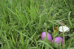 Яичка прячут в траве - пасхе стоковая фотография rf