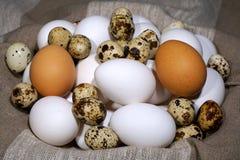 Яичка птицы Различные виды яичек птицы стоковые фото