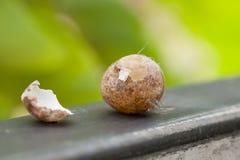 Яичка птицы украденные от что-то Пришл к стробу, естественному backg стоковые изображения