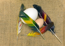 Яичка птицы стоковая фотография
