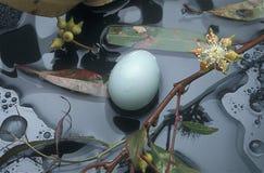 Яичка птиц на земном соре Стоковое фото RF