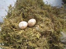 Яичка птиц Стоковые Фото