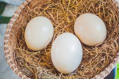 Яичка страуса в корзине 2 всех пасхального яйца принципиальной схемы цыпленока ведра цветут детеныши покрашенные травой помещенны Стоковая Фотография