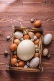 Яичка страуса, гусыни, курицы и триперсток в деревянной коробке, месте для формулировать стоковые изображения rf