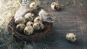 Яичка триперсток в гнезде с пером и сеном Стоковые Фото