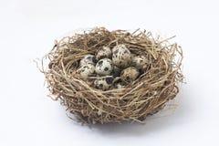 яичка триперсток в гнезде стоковые изображения rf