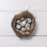 Яичка триперсток в гнезде стоковые фото