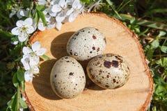 Яичка триперсток в декоративном гнезде на пне На предпосылке зеленой травы Стоковые Изображения