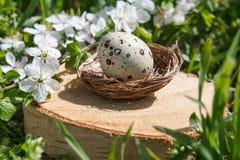 Яичка триперсток в декоративном гнезде на пне На предпосылке зеленой травы Стоковое фото RF