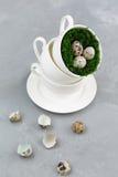 Яичка триперсток в чашке на конкретной предпосылке Стоковые Фото