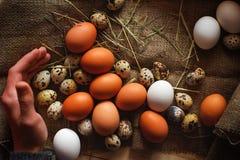 Яичка триперсток и курицы на предпосылке мешковины Стоковое Изображение RF