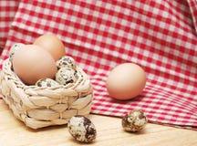 Яичка триперсток и курицы Стоковые Изображения