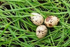 3 яичка триперсток лежа на зеленой траве Стоковое Изображение