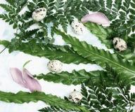Яичка триперсток пасхи и розовые лепестки на зеленых листьях Стоковая Фотография