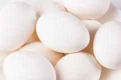 яичка цыпленка близкие поднимают белизны Стоковое Изображение RF