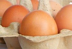 Яичка цыпленка Брайна в коробке carboard Стоковые Фотографии RF