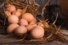 Яичка цыпленка Брайна Стоковая Фотография