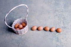 Яичка цыпленка в белой корзине 2 всех пасхального яйца принципиальной схемы цыпленока ведра цветут детеныши покрашенные травой по Стоковая Фотография RF