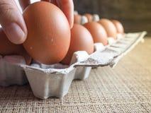 Яичка цыпленка в комплекте Стоковая Фотография RF