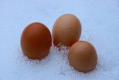 3 яичка цыпленка в сугробе на природе Стоковые Изображения RF