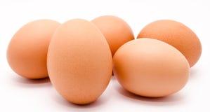 Яичка цыпленка Брайна изолированные на белом крупном плане предпосылки Стоковое Изображение RF