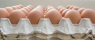 Яичка цыпленка в бумажной панели Стоковая Фотография RF