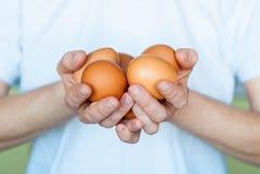 Яичка цыпленка в женских руках Стоковая Фотография RF