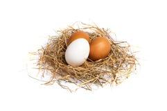 Яичка цыпленка в сене Стоковое Изображение RF