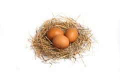 Яичка цыпленка в сене Стоковые Фото