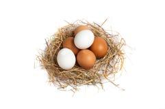 Яичка цыпленка в сене Стоковая Фотография
