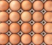 Яичка цыпленка в яичках панели Стоковое Изображение