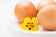3 яичка цыпленка и желтого цветок Стоковые Изображения RF