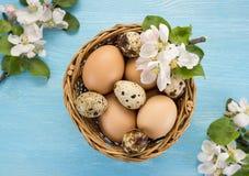 Яичка цыпленка и триперсток в цветках корзины и весны на голубой деревянной предпосылке Стоковые Фото